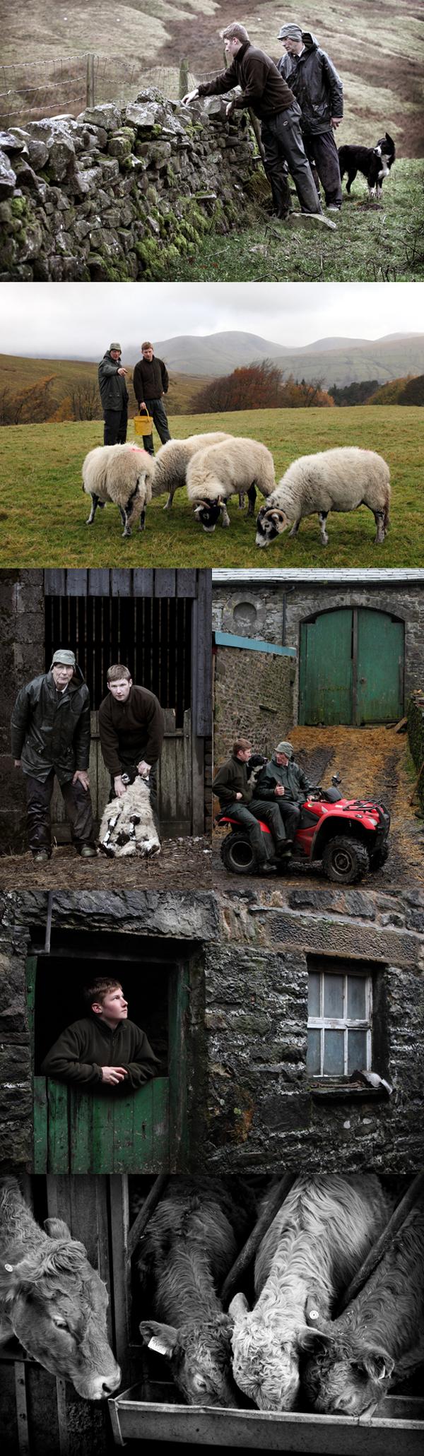Hill Farming Cumbria