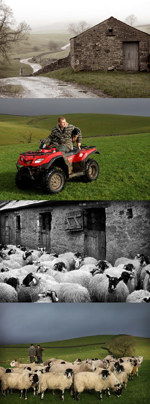 Lake District Sheep Farming