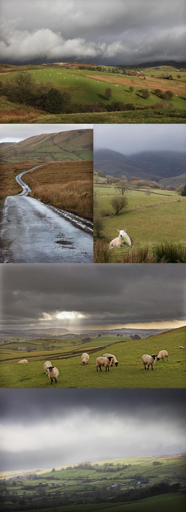 Sheep Lake District