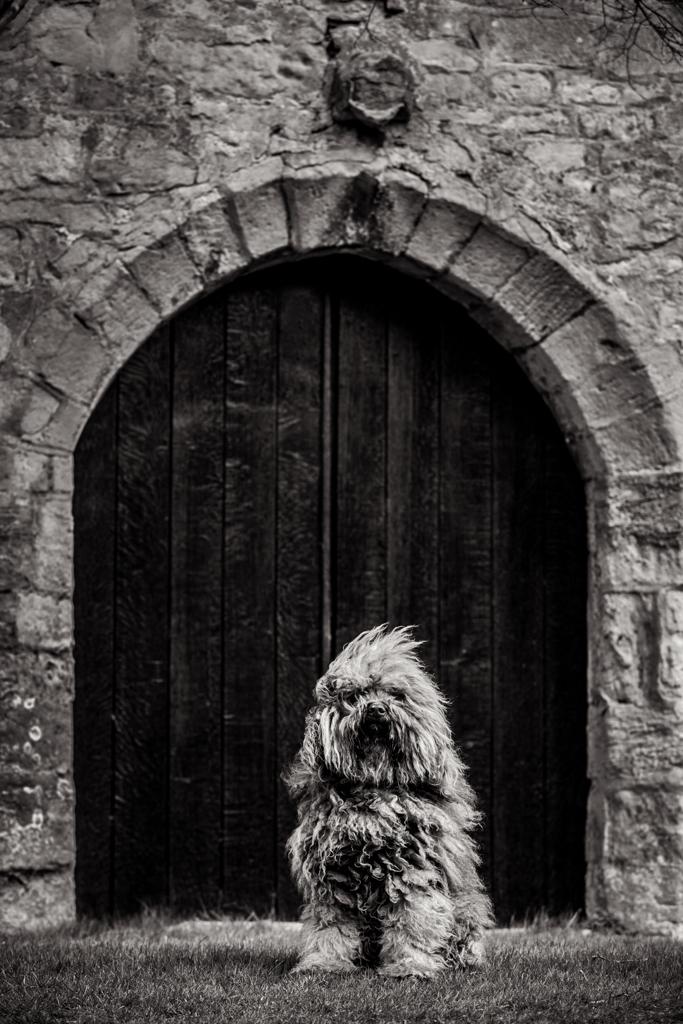 Dog Photographer Oxfordshire-DM-0198_005
